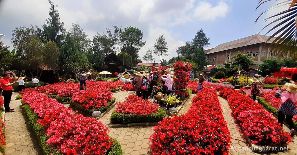 Salah Satu Sudut Bunga di Taman Begonia
